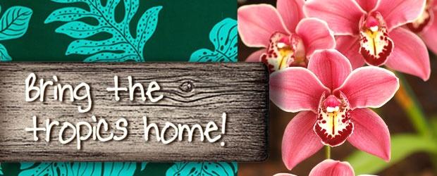 Destination Reception At Home (DIY)